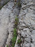 � на камнях растут деревья