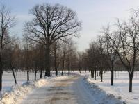 Дорога к Альма матер. Зима.