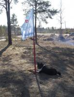 Лая охраняет флаг (и косточку)