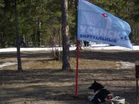 Лая охраняет флаг