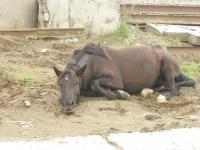 Город-грустная лошадь