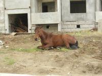 Город-лошадь